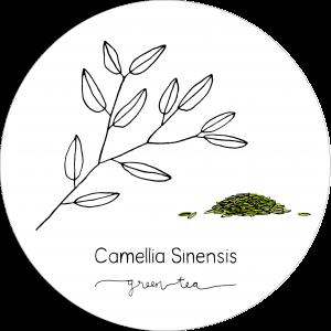 Rond_Camellia_Green2