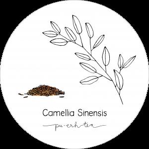 Rond_Camellia_Pu-Erh2