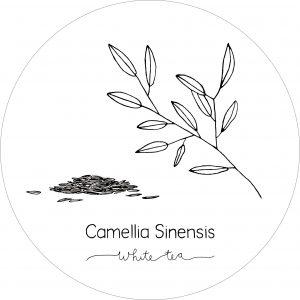 Rond_Camellia_White2