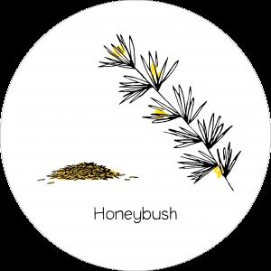 Rond_Honeybush2